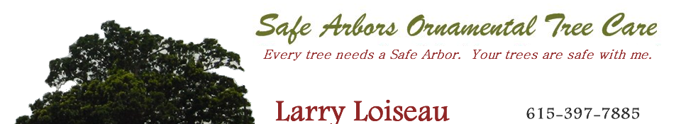 About Safe Arbors